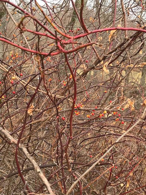 Thorns 1