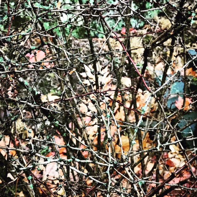Thorns 5