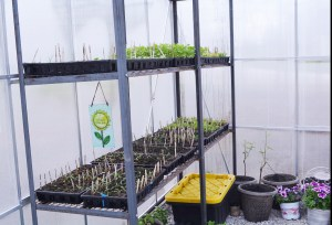 greenhouse seed plants 1