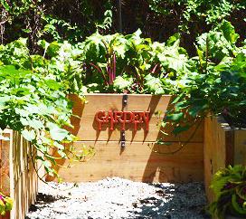 Garden Update – Part 4