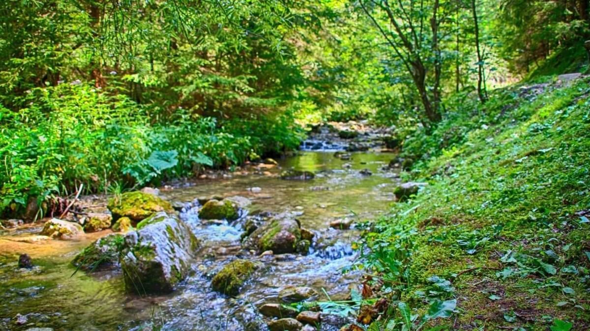 River at Jánošíkove Diery, Slovakia