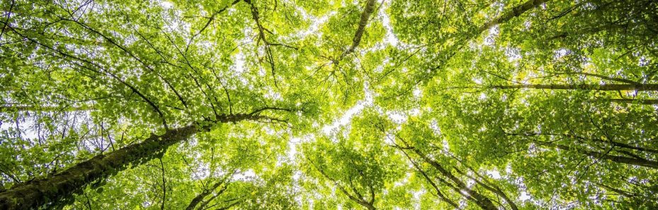 the importance of sustainability in business