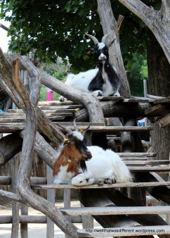 More happy goats.