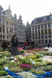 Flower market in the Grand Place