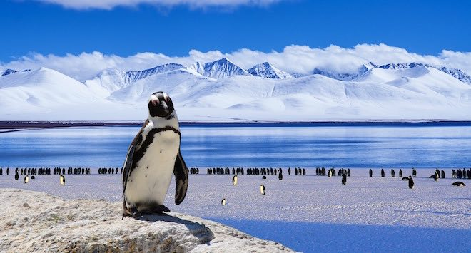 Penguins of Antarctica.