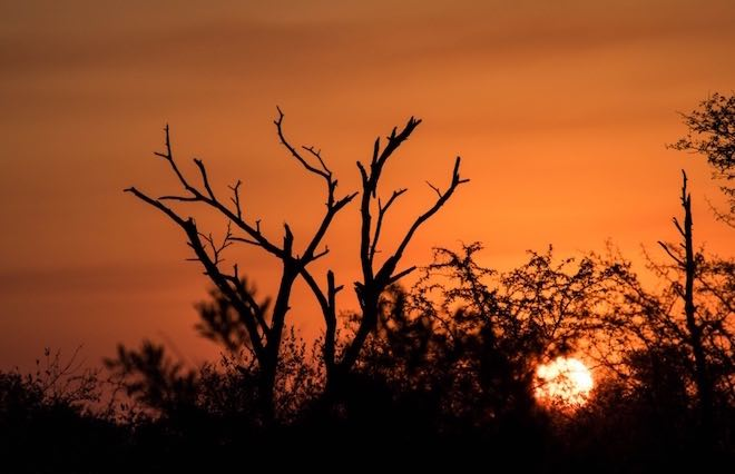 Classic African sunset - Image Jason Dutton-Smith.