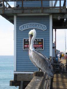 Charmed by Oceanside, California