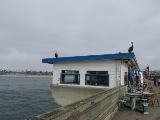 Pelicans peering down on us from the roof of the cafe and shop