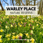 Warley Place Nature Reserve in Essex