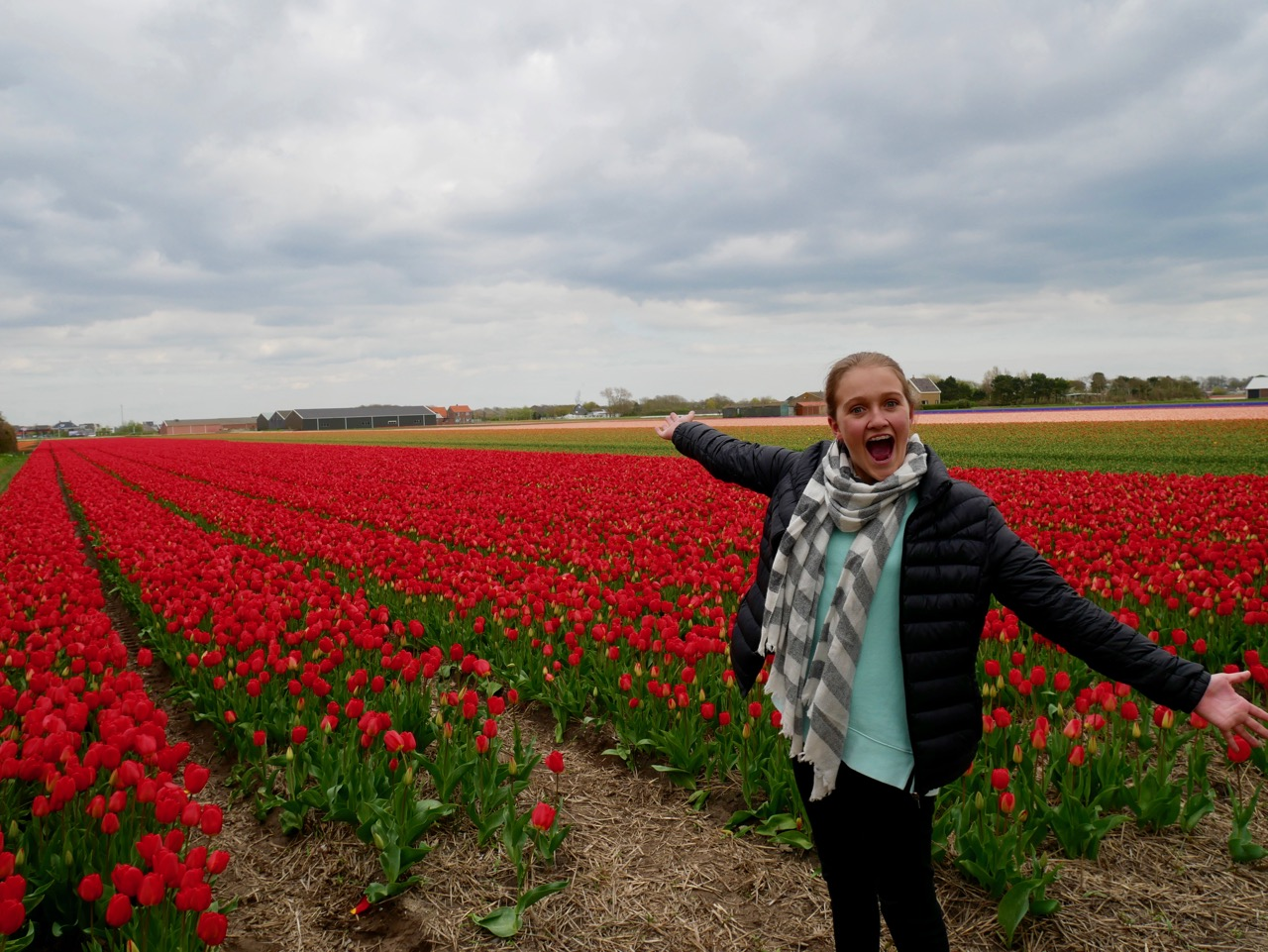 Tulips, Tulips, and More Tulips and An Interview with Ella