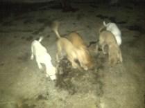 Cachorros de 3 meses para dar en adopción