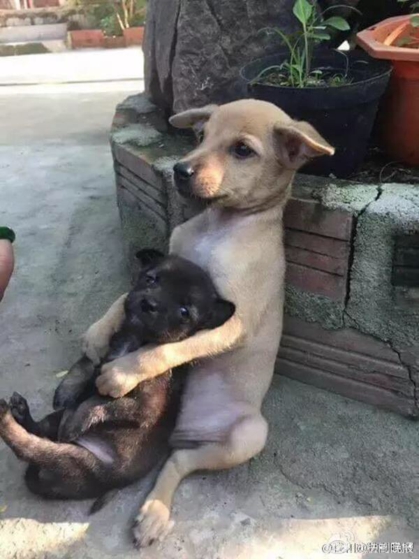 Stray Puppies Wont Stop Hugging Each Other Even After Theyre - These two stray puppies were just rescued and they refuse to stop hugging each other