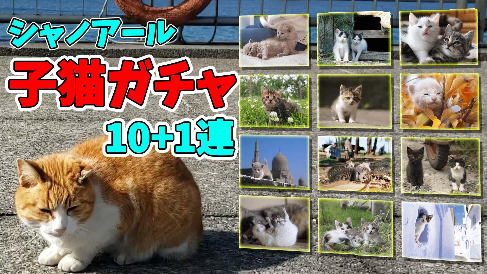 シャノアール岩合光昭子猫クジ