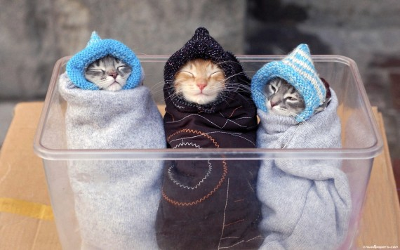 All Snuggled Up Tight