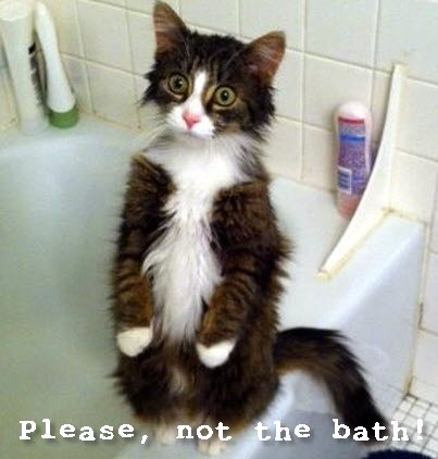 Not the bath!