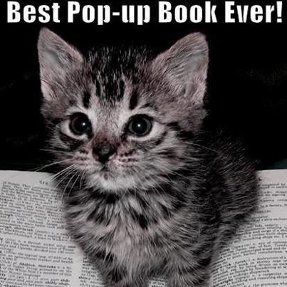 best pop up book ever cat