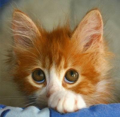 big eyes cute
