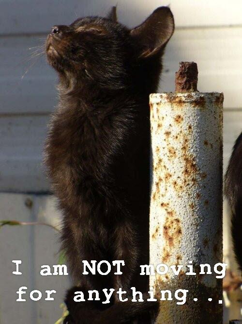 black long hair cat in sun