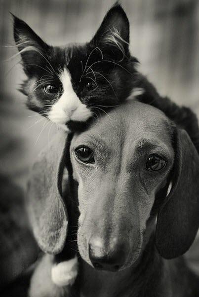 bw cat dog