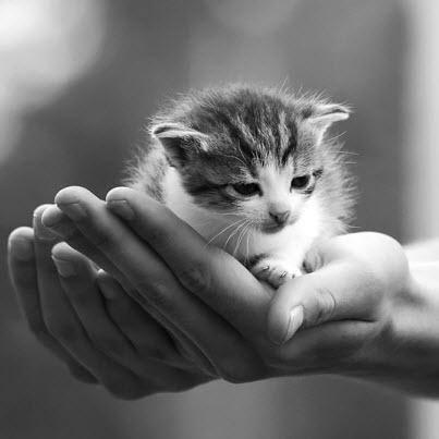 bw kitten hand
