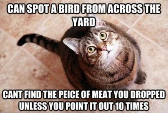 can spot a bird
