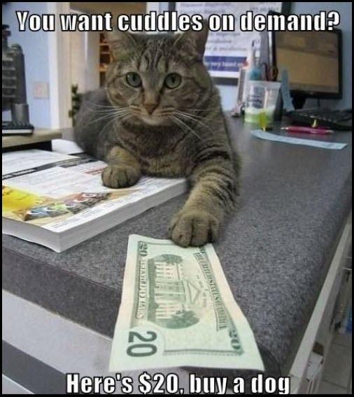 cat $20