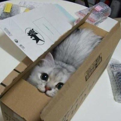 cat in box postage