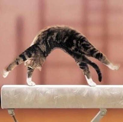 cat on balance beam