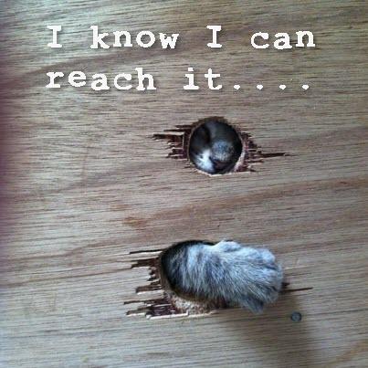 cat paw reaches through