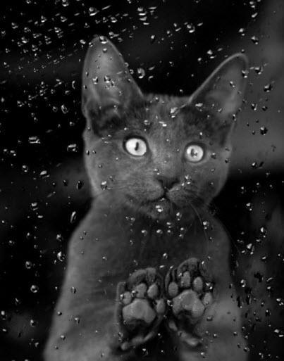cat rain