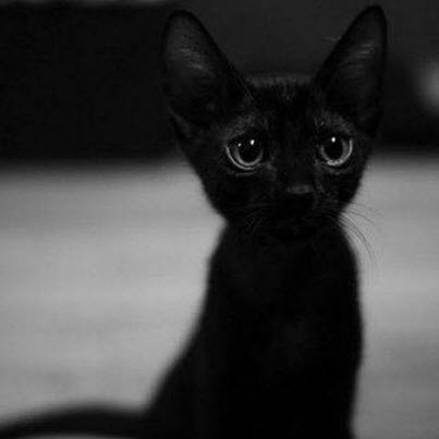 Cute Kitty of the day alert!