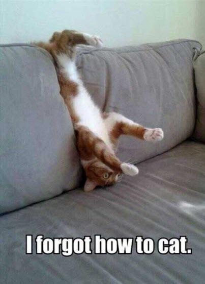 forgot to cat