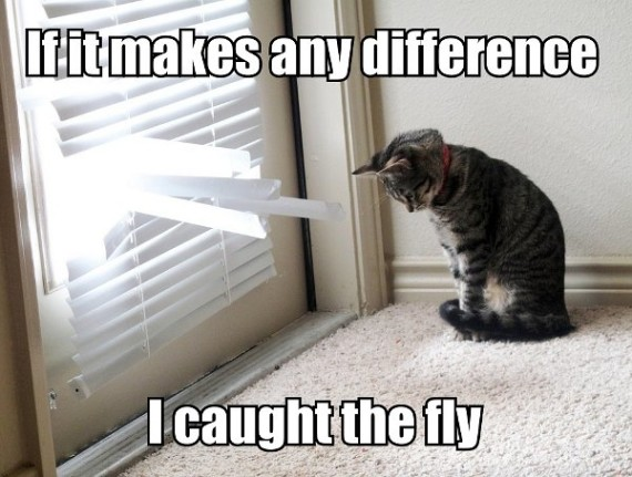 if-it-makes-any-difference-i-caught-the-fly-cat
