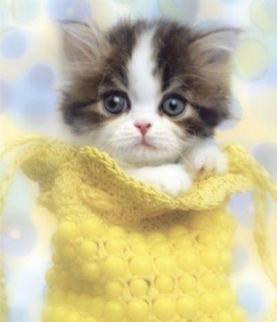 kitten in yellow sock big