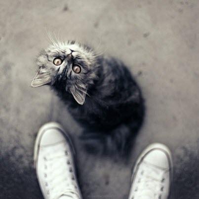 kitty at feet