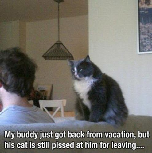 no holiday cat