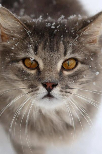snowing kitten