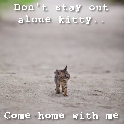 stray kitten all alone