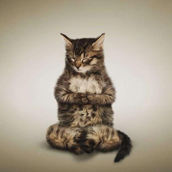 yoga kitten daniel borris