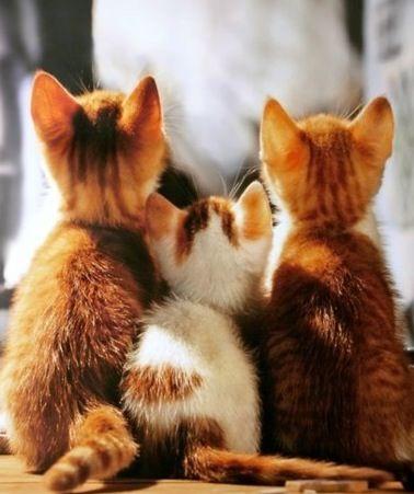 Set of kittens