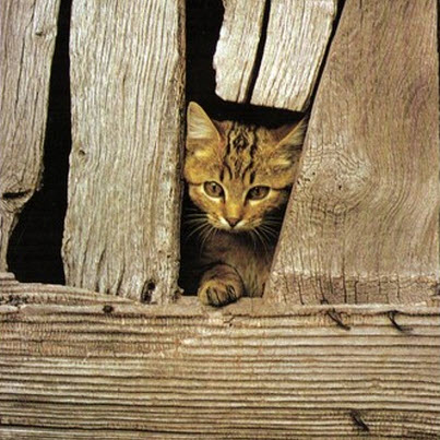 cat in barn