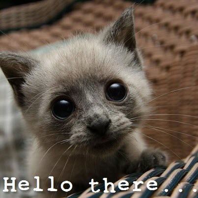 hello dere