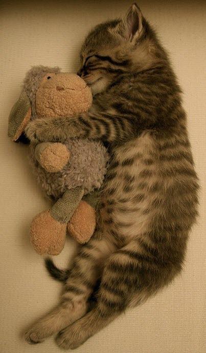 kitten cuddles rabbit