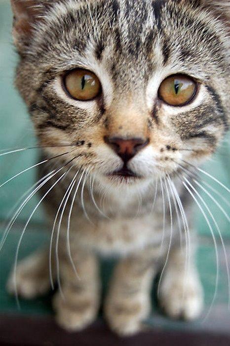 up close kitten face