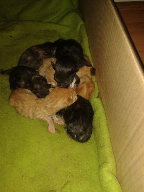 8hr old kittens