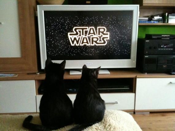 scifi cats
