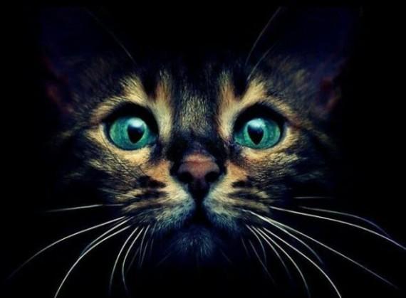 blue eyes in the dark kitten