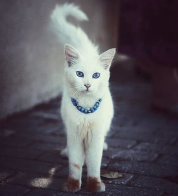 jewellery cat large