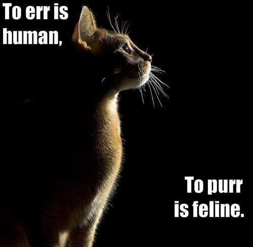 purr feline