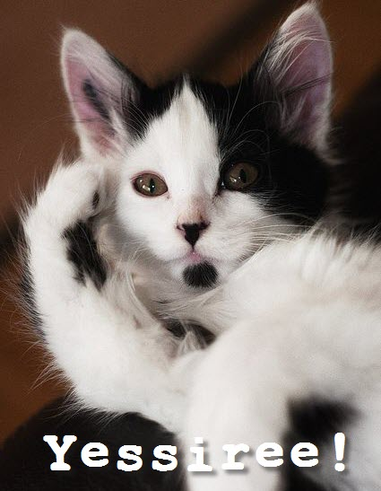 yessir kittie